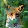 Изображение пользователя foxsa.